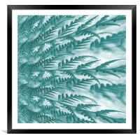 frosted fern, Framed Mounted Print