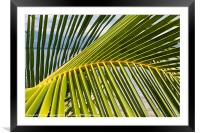 Palm frond at the beach, Framed Mounted Print