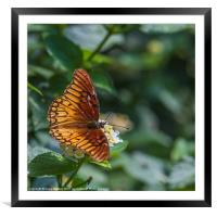 colourful orange butterfly, Framed Mounted Print