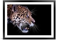 Jaguar snarling Paintover, Framed Mounted Print