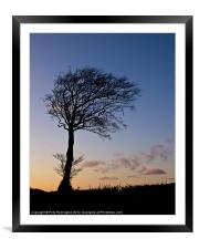 Lone tree at Sunset, Framed Mounted Print