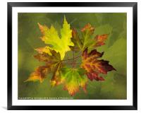 Autumn composition, Framed Mounted Print