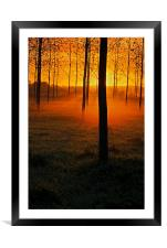 Sunrise through the Trees, Framed Mounted Print