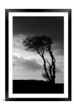 A lone tree at Horns Cross, Framed Mounted Print