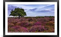 Dunwich Heath Suffolk, Framed Mounted Print