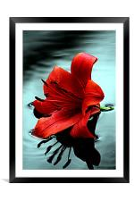 Lilly, Framed Mounted Print