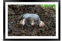I Am A Mole, And I Live In A Hole!, Framed Mounted Print