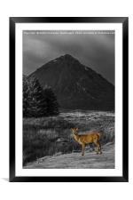 Deer Hind Selective Colour, Framed Mounted Print