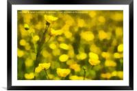Painterly Buttercups, Framed Mounted Print