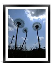 Dandelions, Framed Mounted Print