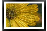 After The Rain., Framed Mounted Print