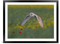 Barn Owl, Framed Mounted Print