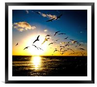 Wings on the Wind, Framed Mounted Print