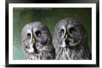 Double Take, Pair of Owls, Framed Mounted Print