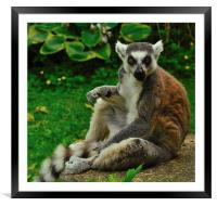 What?!, Framed Mounted Print