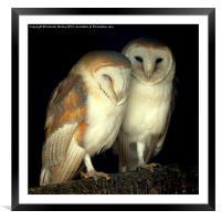 Barn Owl Love, Framed Mounted Print