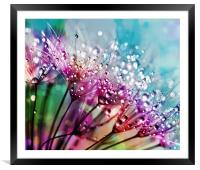 Dewdrops And Rainbows, Framed Mounted Print