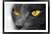 The Golden Eyes of a Cat, Framed Mounted Print