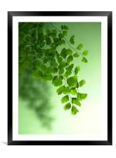 Green is the Colour, Framed Mounted Print