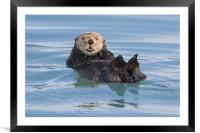 Sea Otter , Framed Mounted Print