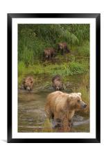 Bear family II, Framed Mounted Print