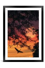 LONELY ARE THE FREE, Framed Mounted Print