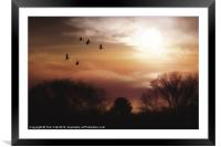 LAST FLIGHT OF THE DAY, Framed Mounted Print