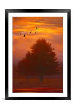TREES OF AUTUMN, Framed Mounted Print