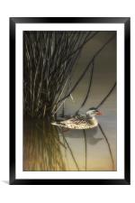 HIDING IN THE REEDS, Framed Mounted Print