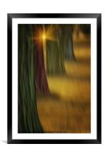 THE RAINBOW FOREST, Framed Mounted Print