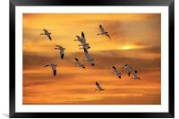 SNOW GEESE OF AUTUMN, Framed Mounted Print