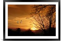 SNOW GEESE AT SUNSET, Framed Mounted Print