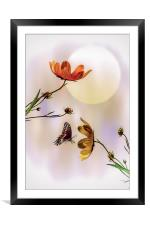 Natures Gifts, Framed Mounted Print