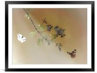 The Beauty Of Nature, Framed Mounted Print