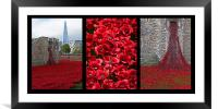 Poppies in Remembrance , Framed Mounted Print