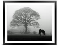 Horse in the Mist, Framed Mounted Print
