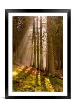 Deanclough forest, Framed Mounted Print