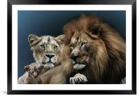 Lion Family, Framed Mounted Print