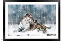 Kaiser Katrina and the Kiss Tiger Canvas Print, Framed Mounted Print