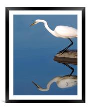 Mirrored Egret, Framed Mounted Print