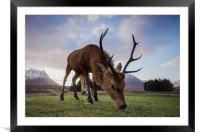 Highland Deer, Framed Mounted Print