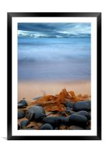 Beach Seaweed, Framed Mounted Print