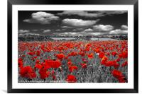Crimson Poppies, Framed Mounted Print
