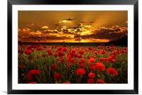 Sunset Poppies The BBMF, Framed Mounted Print