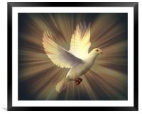 Dove of Peace., Framed Mounted Print