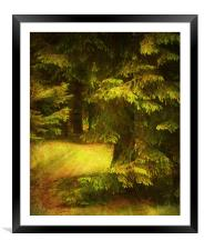 Heart of the Forest., Framed Mounted Print