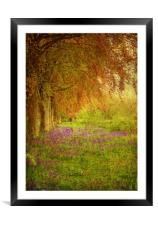 The Bluebell Pathway., Framed Mounted Print