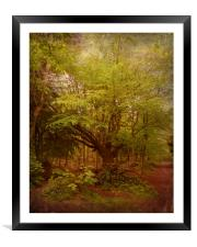 My Old Friend in Spring., Framed Mounted Print