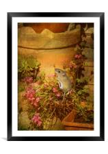 Looking for a Home., Framed Mounted Print