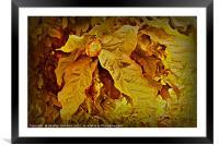 Chestnut., Framed Mounted Print